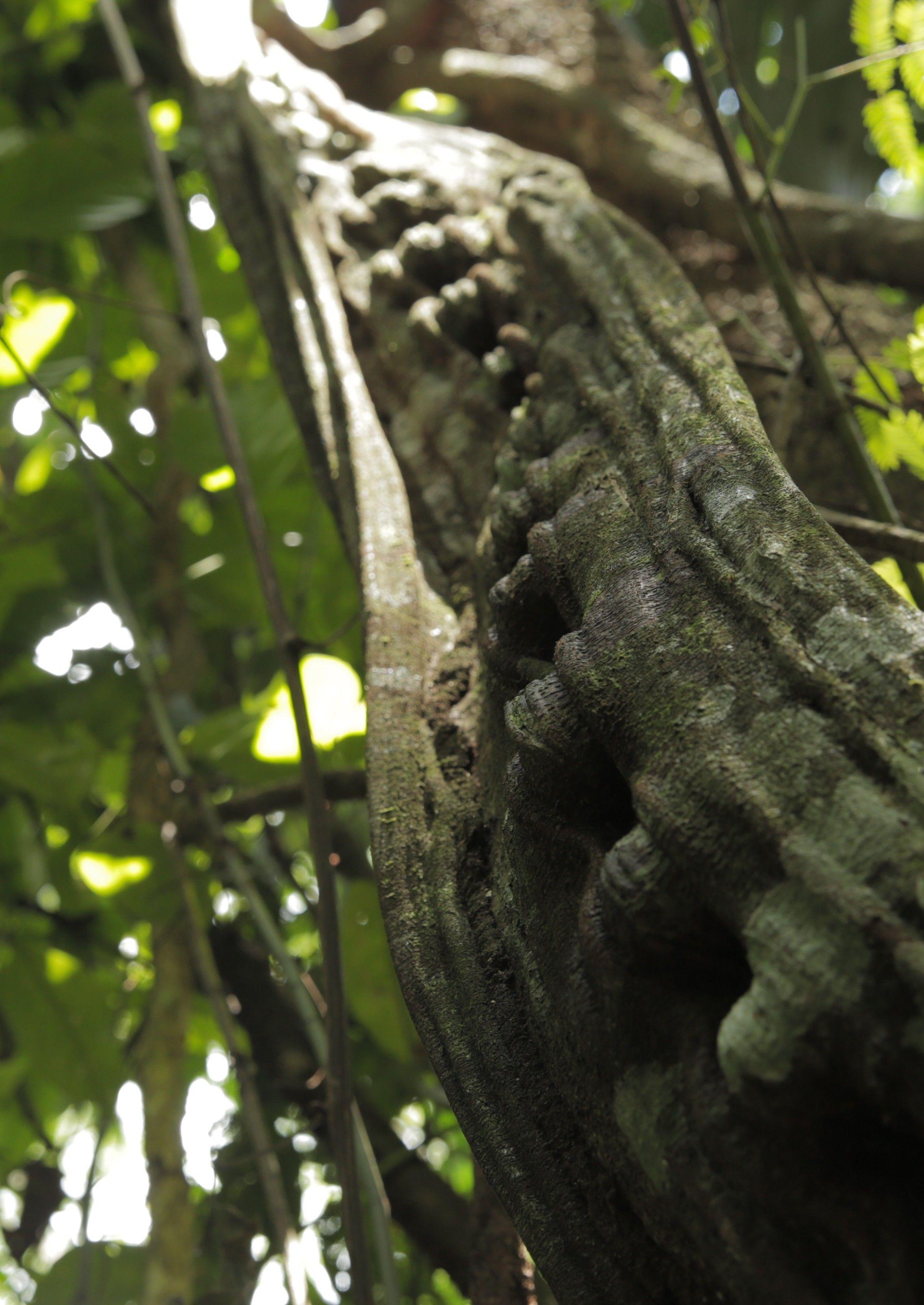 Santo Daime - Império da Floresta (2015)