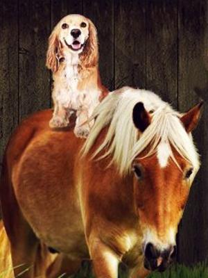A Dog & Pony Show  (2016)